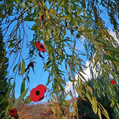 poppies in the trees