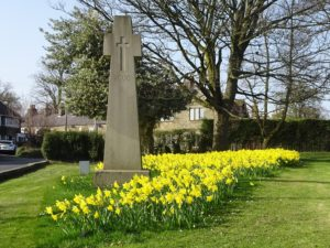 Daffodils at the Millennium Cross